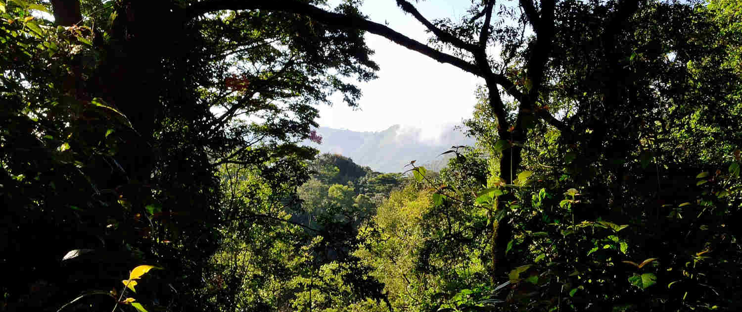 Bwindi Impenetrable Forest in Uganda Safari with Passion for Adventures Safaris