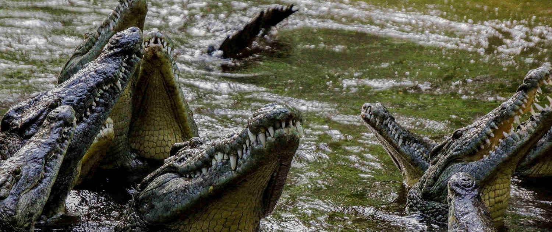 Crocodile in Kenya Safari with Passion for Adventures Safaris