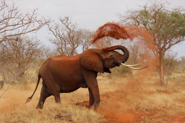 10 Day Samburu / Mt.Kenya / Bogoria / Nakuru / Maasai Mara Tour (PFA KLS-008)