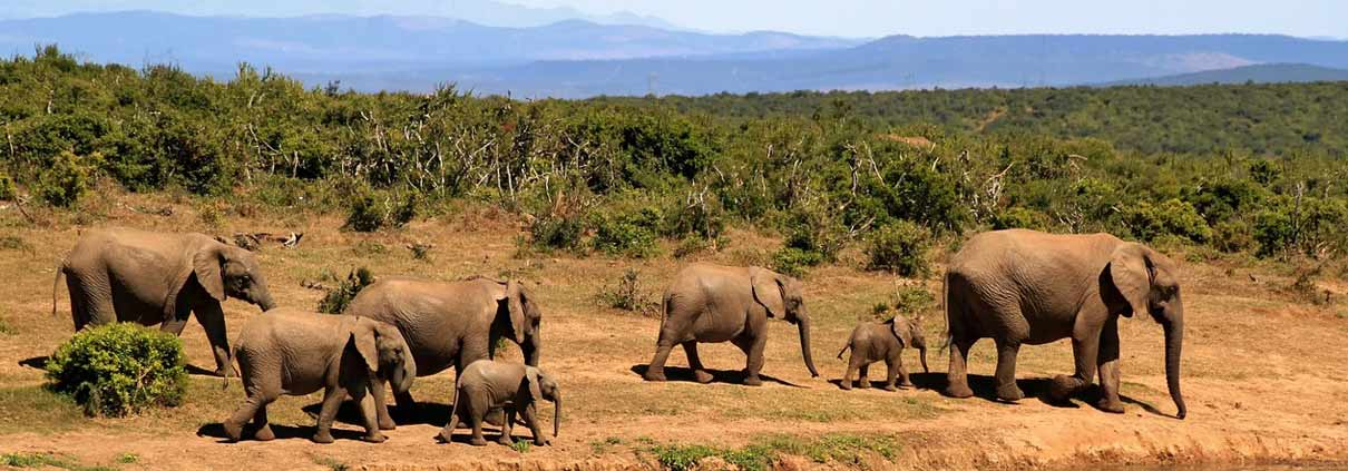 Elephants in Kenya Safari with Passion for Adventures Safaris