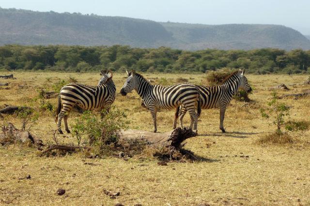 5 Day Lake Manyara / Ngorongoro Crater (PFA TZ-007)