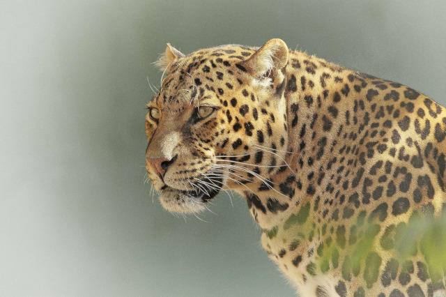6 Days in Manyara / Serengeti / Ngorongoro (PFA TZ-002)