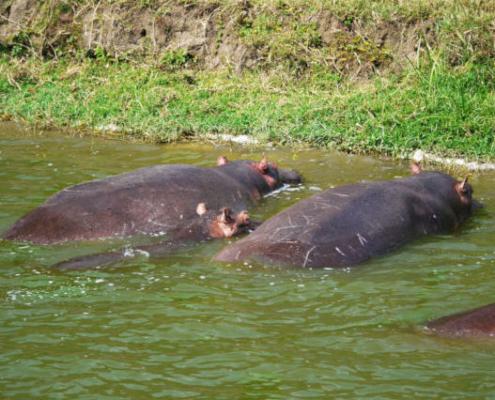 Queen Elizabeth National Park Uganda Safari with Passion for Adventures Safaris