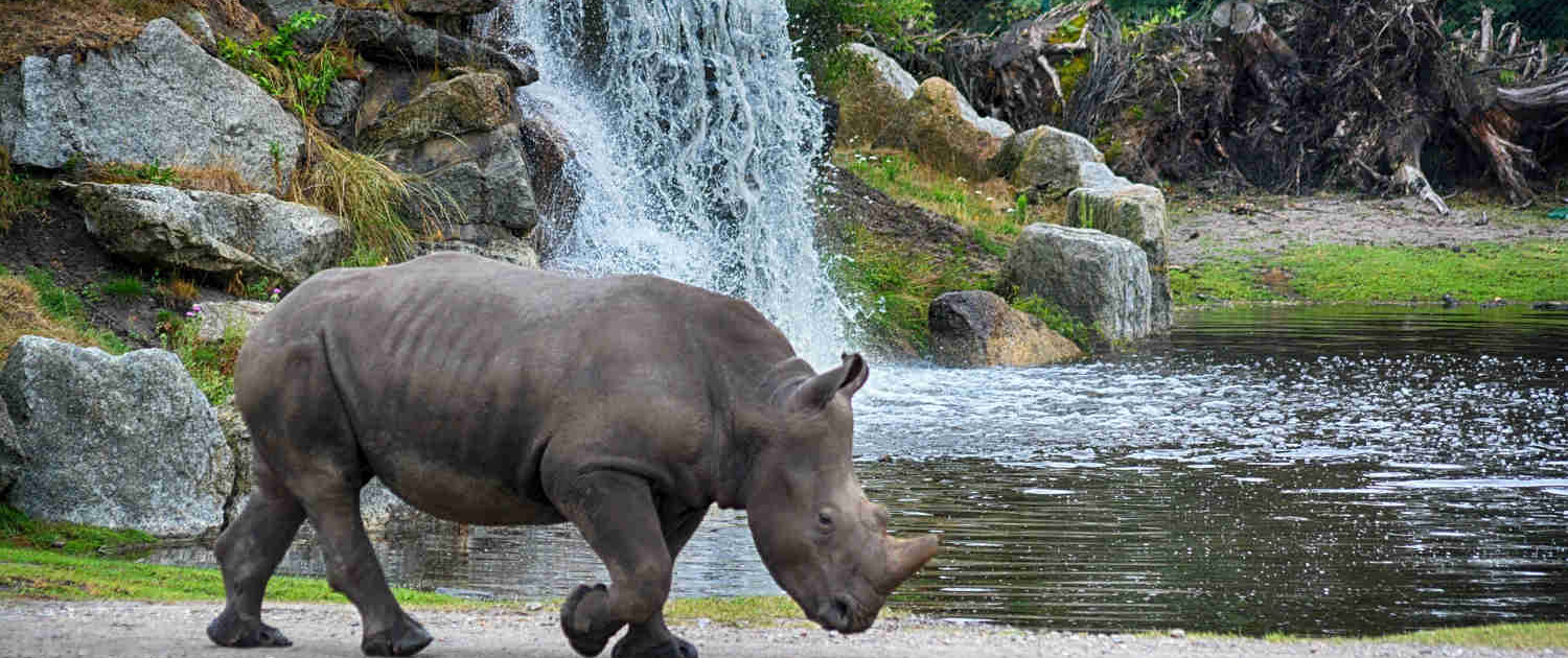 Rhino at Waterfall in Tanzania Safari with Passion for Adventures Safaris