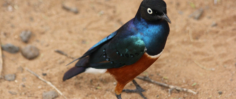 Bird at Tarangire Park in Tanzania Safari with Passion for Adventures Safaris