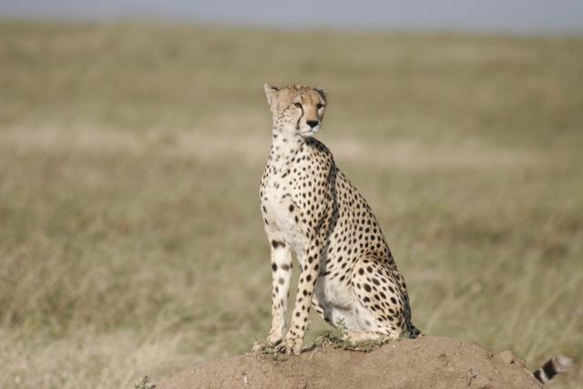 4 Day Tarangire / Ngorongoro (PFA TZ-004)