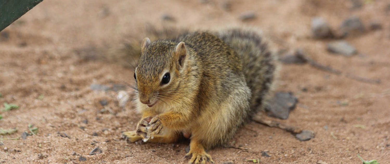 Squirrel at Tarangire Safari in Tanzania with Passion for Adventures Safaris