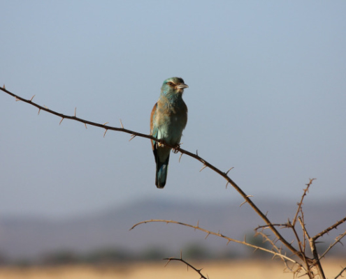 Birdwatching at Tsavo East, Amboseli Safari with Passion for Adventures Safaris