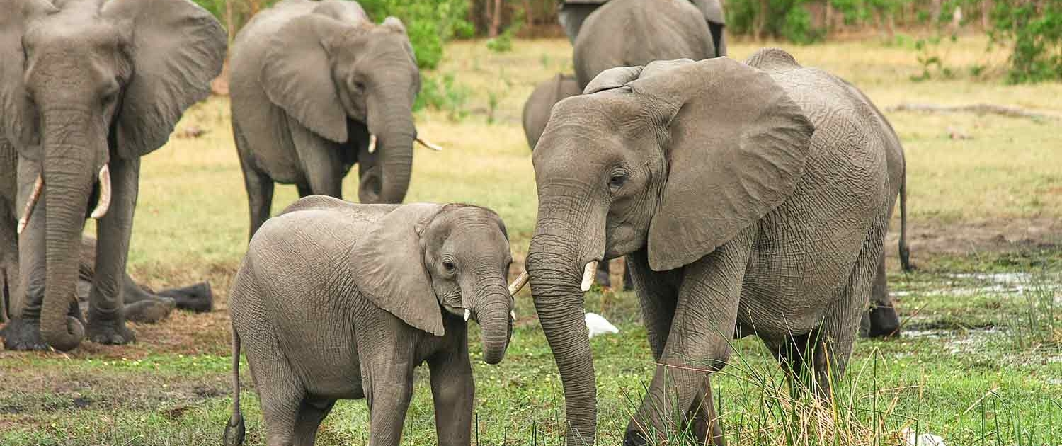 Elephants in Kenya with Passion for Adventures Safaris