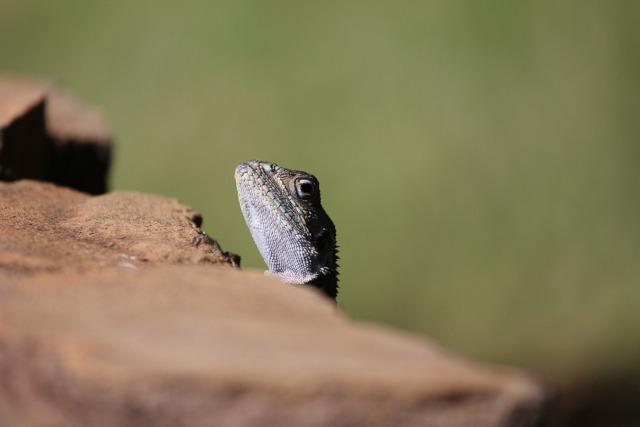 2 Days Tsavo East National Park (PFA MS-003)