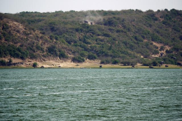 5 Day Murchison Falls & Queen Elizabeth Combined Safari (PFA UG-007)