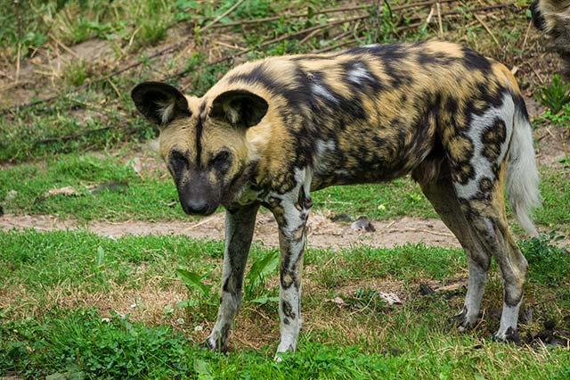 9 Days Sweetwaters / Mt Kenya / Nakuru / Maasai Mara (PFA KLS-007)