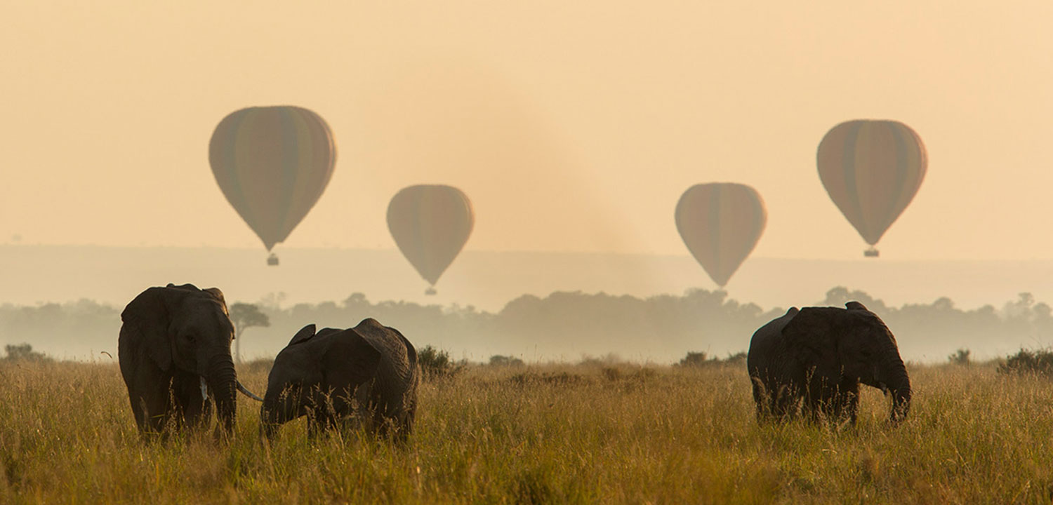 Elephants in Masai Mara Safari, Kenya with Passion for Adventures Safaris